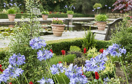 Rare plants at Borde Hill Garden