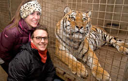 Be a big cat keeper for a day at Dartmoor Zoo