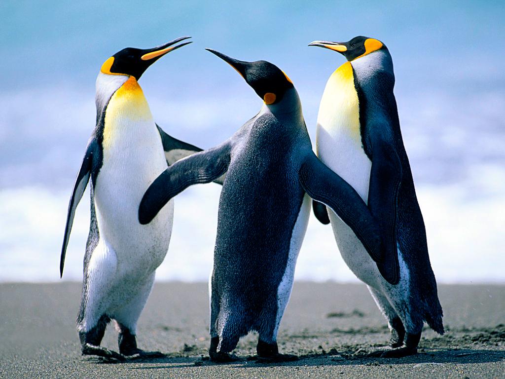 penguins alt