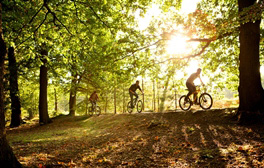 Tree top adventures and forest segways at Go Ape