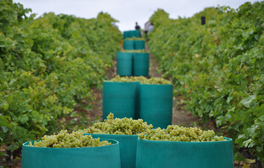 Biddenden Vineyards in Kent