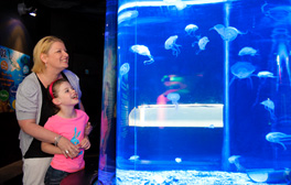 Dive into an underwater world at SEA LIFE Scarborough