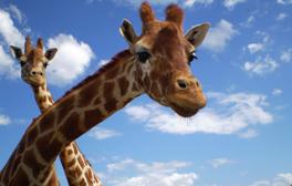 Animal magic at Blackpool Zoo