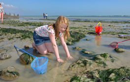Comb Sussex's thriving coastline for fossils and marine life