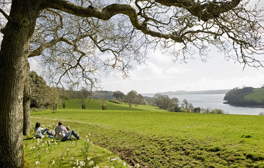 Relax in Trelissick Gardens
