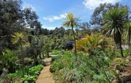 A botanical treasure trove on the Jurassic Coast