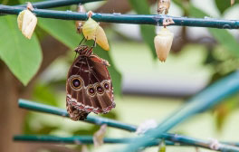 Become a butterfly expert at Cumberland House