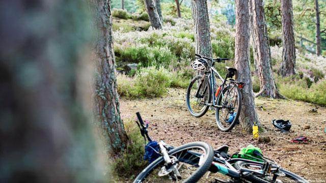 421aa399c77 Mountain Biking & Cycling Holidays in England | VisitEngland
