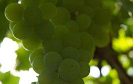 Enjoy fine wines at Denbies Wine Estate