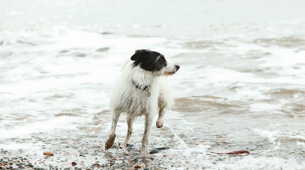 Dog Friendly Beaches South West France