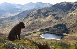 A dog-friendly holiday in Cumbria