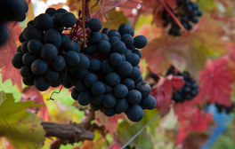 Give your taste buds a treat at the Furleigh Estate vineyard