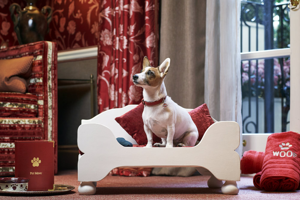 Egerton House Hotel, Puppy Holidays