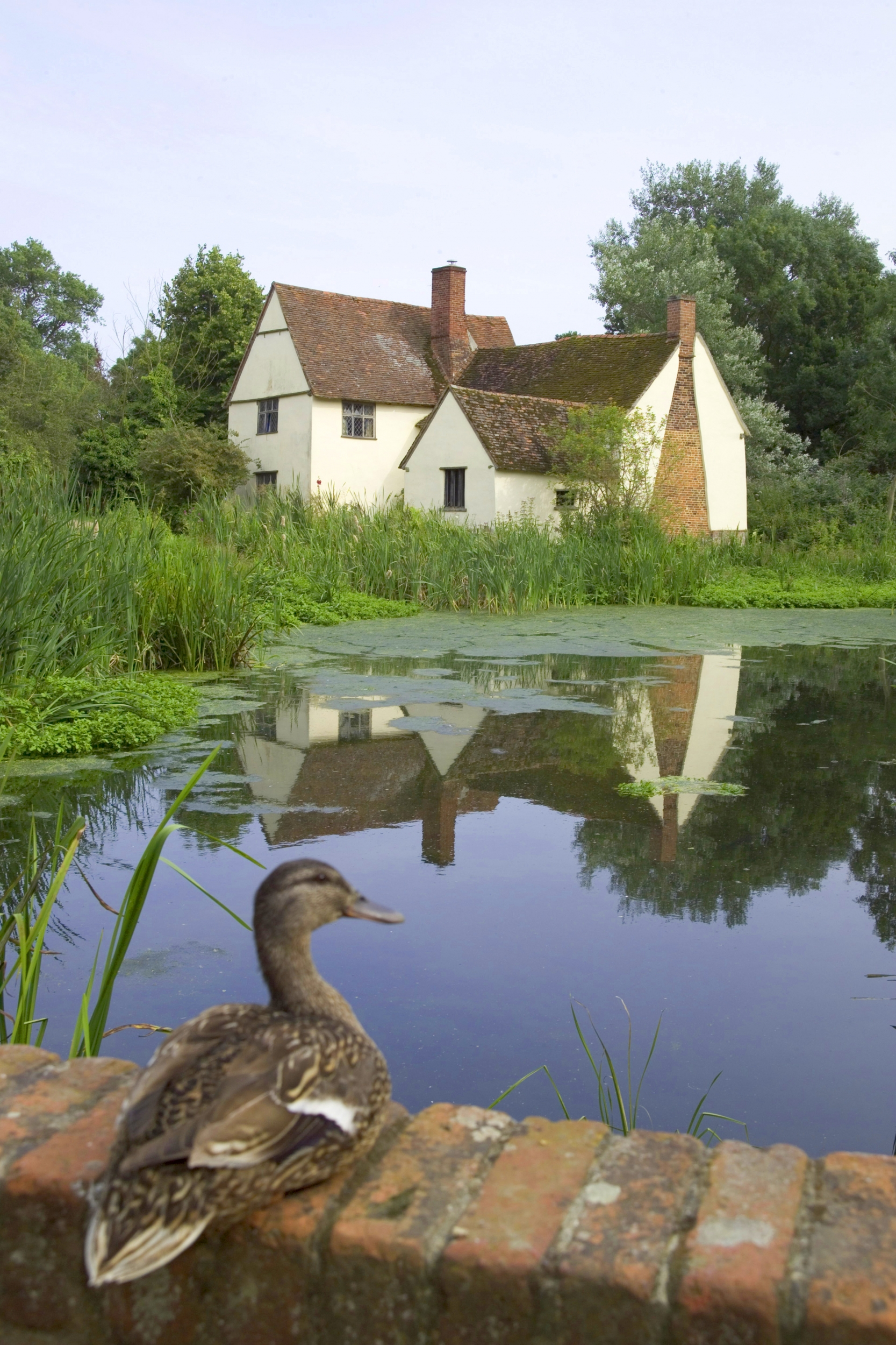 A duck sits infront of Flatford Mill in Essex