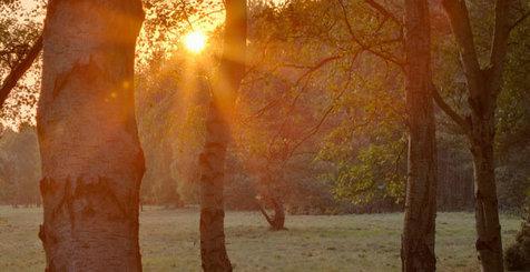 Woodlands of England