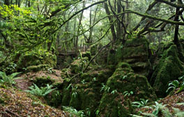Be transported into your very own Star Wars film in Puzzlewood