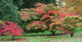 Batsford Arboretum, The Cotswolds