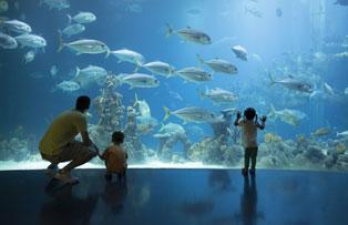 Plan half term activities at The Deep aquarium in Hull