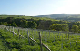 Raise a glass of English wine at Holmfirth Vineyard