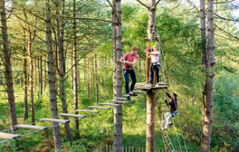 Swing through the trees at Leeds Castle