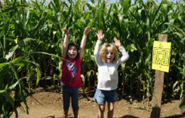 Get lost in Wistow Maze's three miles of pathways