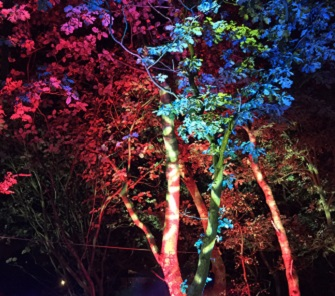 Things To Do This Weekend: Magical woodland Cheshire