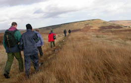 Take a walk on the wild side at Marsden Moor