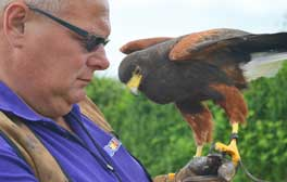 Soaring high with unique falconry experiences at Marsh Farm