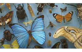 Explore the Oxford University Museum of Natural History