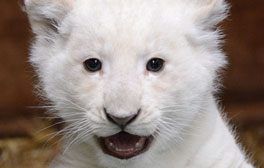 Get close to animals at Paradise Wildlife Park