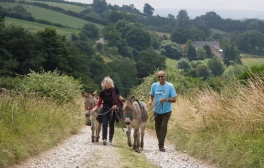 Enjoy a walk with donkeys