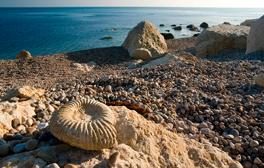 Chasse aux fossiles sur la côte jurassique