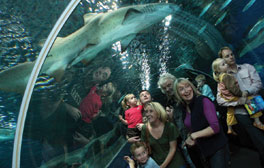 Underwater adventures at Blue Planet Aquarium