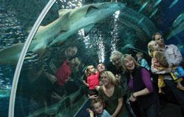 Underwater adventures at Blue Planet Aquarium