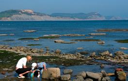 Fossils and sandcastles at Lyme Regis