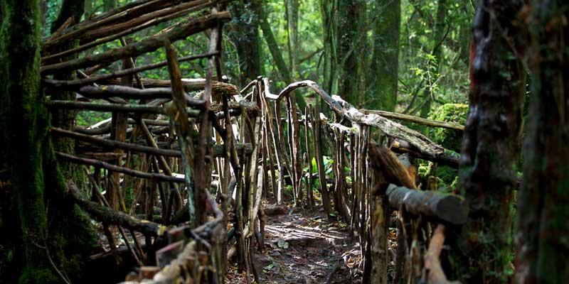 Puzzlewood Forest, Wye Valley