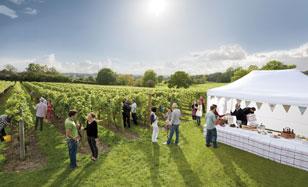 England's vineyards