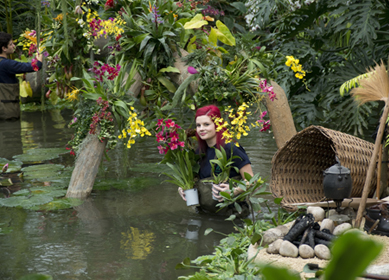 Royal Botanic Gardens - Kew - Orchid Festival 2014 (c)RGB Kew (3) 389x280