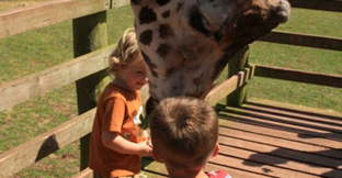 Two children feeding a giraffe at South Lakes Safari Zoo