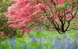 Witness nature's kaleidoscope of colours at Westonbirt Arboretum