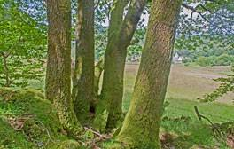 Great Knott Wood