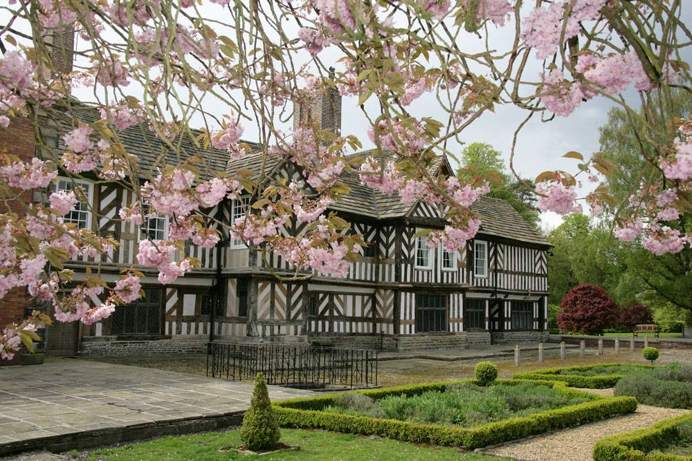 Spring view of a pink cherry blossom tree in full bloom with the Tudor exterior of Adlington Hall in the background