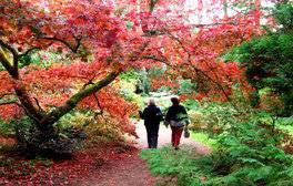 Batsford Arboretum, Gloucestershire - Autumn (c) VisitEngland