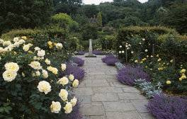 Chartwell, Kent - The Golden Rose Walk (c)National Trust Images, Stephen Robson