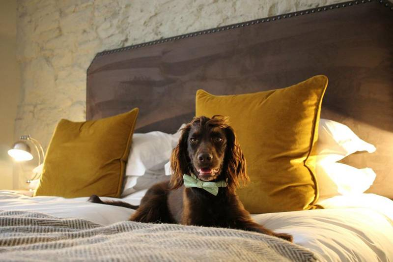 A dog on a bed in a hotel
