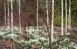 Dunham Massey, Cheshire - Winter Garden (c) National Trust Images, Jonathan Buckley