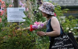 Easton Walled Gardens, Lincolnshire - Sweet Peas (c) VisitEngland