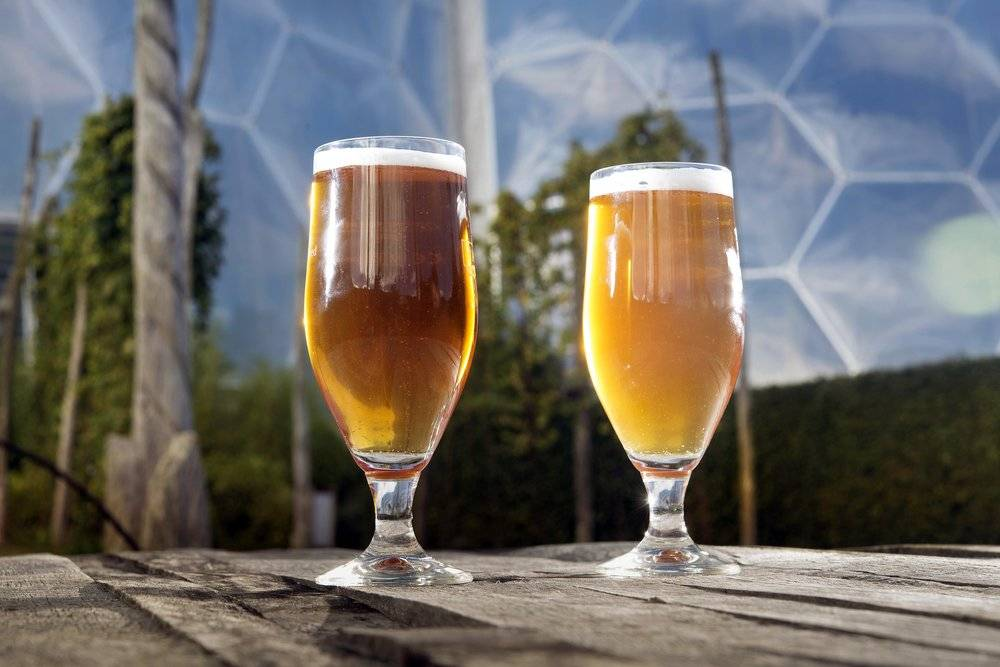 Eden Project Beer Festival