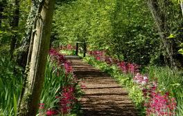 Fairhaven Woodland & Water Garden, Norfolk (c) VisitEngland