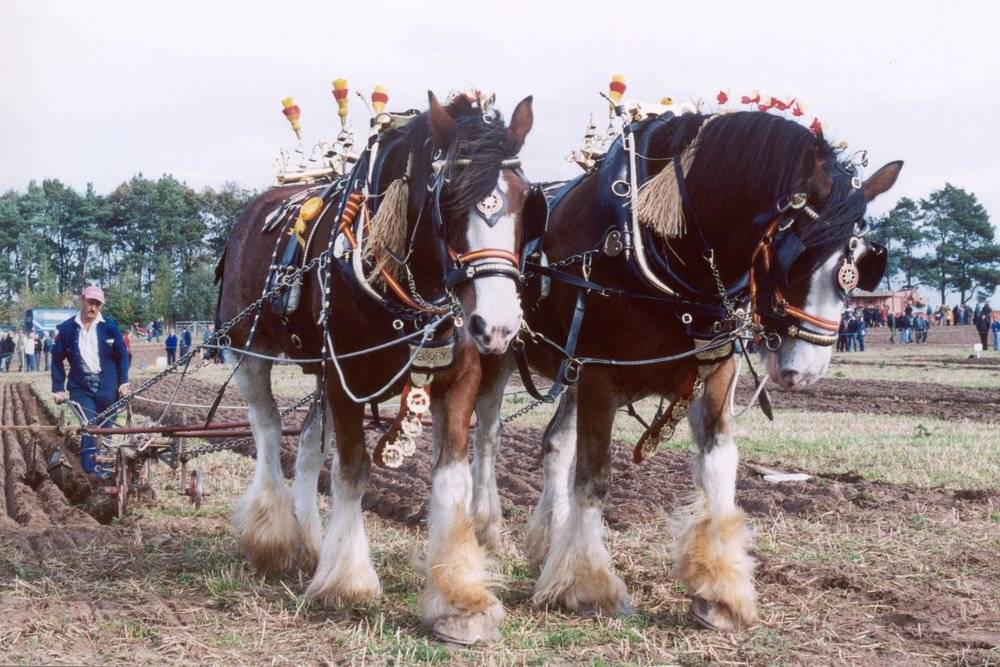 Horse Ploughing at World Ploughing Festival